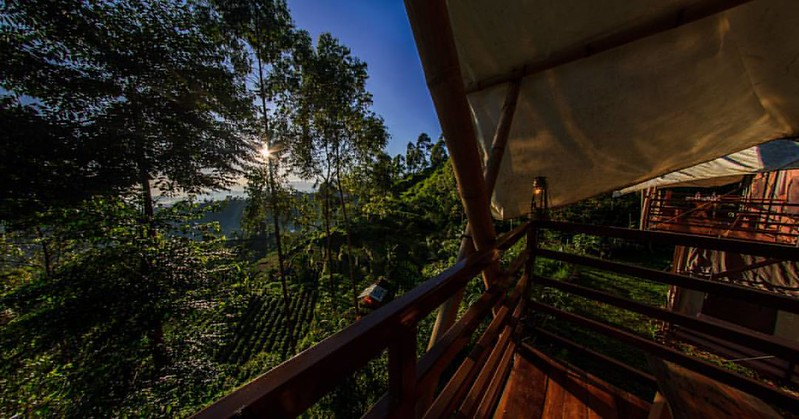 Forest outlook from a glamping platform, highlighting the novel experience of being within the tree canopy of a nature reserve.