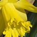 Yellow, February 2006