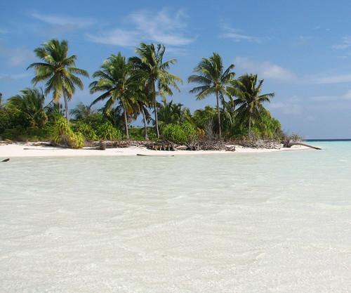 ocean beach geotagged palmtrees tropical maldives filitheyo hamzaisland filitheyoislandresort geo:lat=3199515 geo:lon=72997922