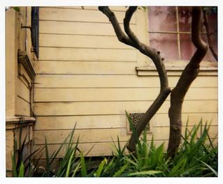 lemon tree & house | by lawatt