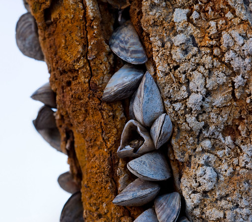 geotagged rust zebramussels stitchedmacro