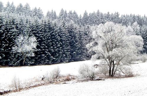 caledoniafan nikon nikoncoolpixl820 oremountains thalheim brünlos brünloserbach nature landscape natur landschaft winter wald forest