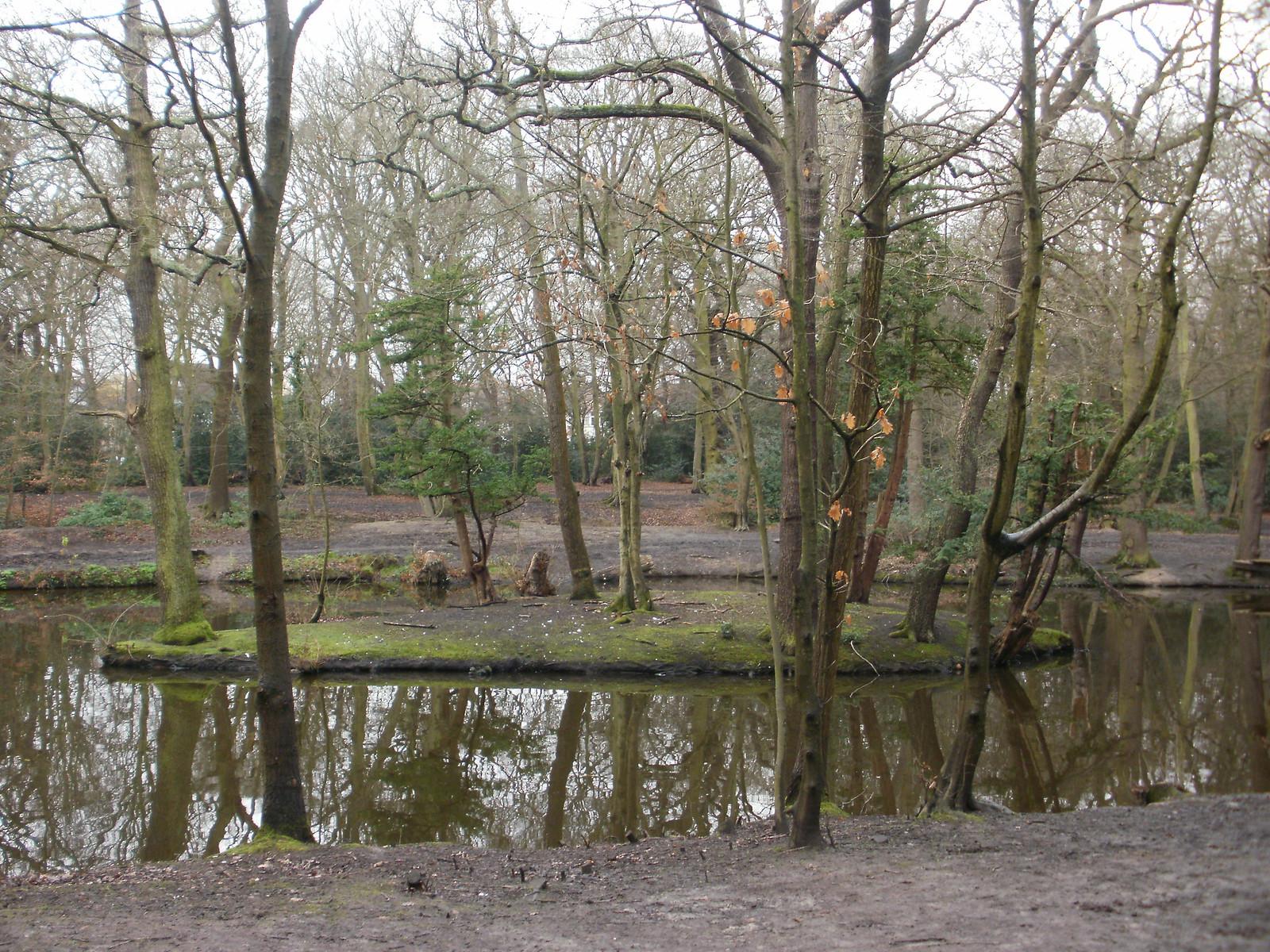 Epping Forest pond island OLYMPUS DIGITAL CAMERA