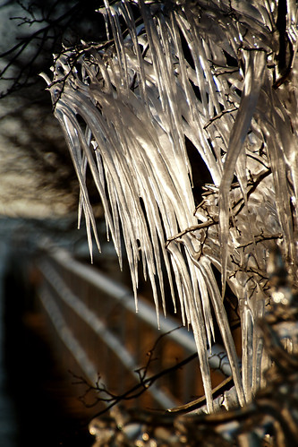 winter cold tree ice nature thanks backlight fence landscape outdoors morninglight frozen crystal path branches teeth horizon shoreline freezing lakemichigan walkway hanging xo february minimalism fangs heavy railings icicles shards lakepark formations daggers wintry milwaukeewisconsin thegreatlakes tamron18270 nikond5100 photoshopchen