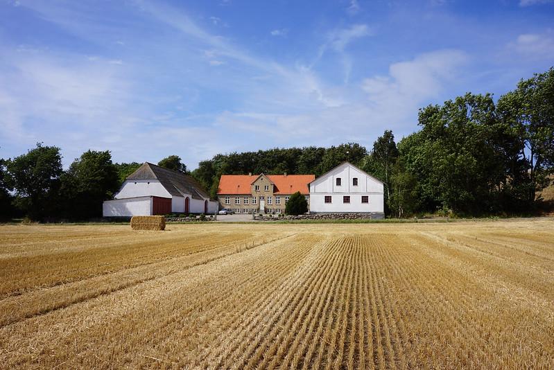 Tjoernbjerg-Marker-2014 (16)