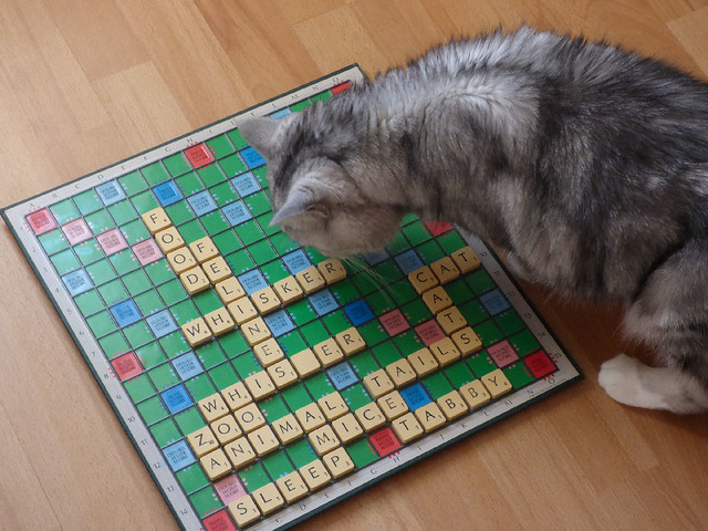 Tico playing Scrabble