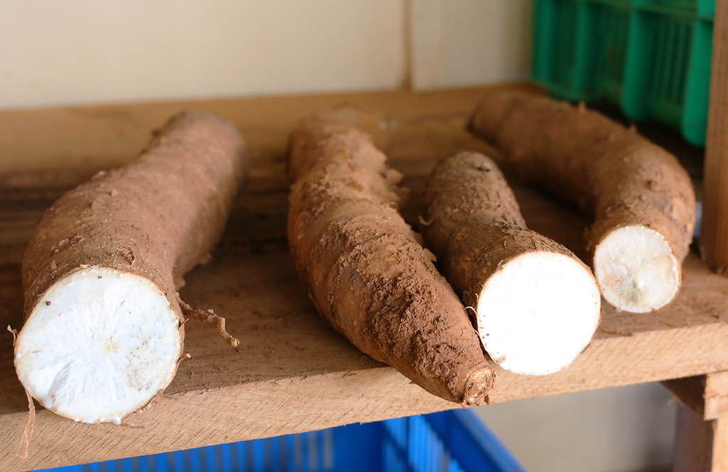 Cassava Lab Uganda 16 Credit-S.Quinn_CIP