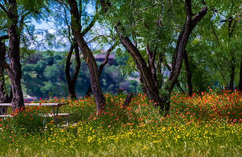 flowers trees plant tree austin outdoor depthoffield serene laketravis pacebend