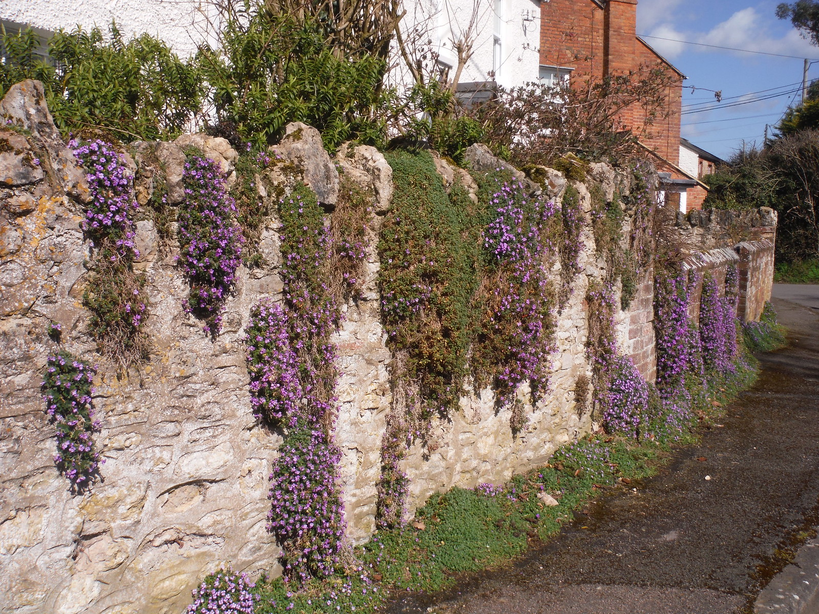 Garden Wall in Cuddington SWC Walk 193 Haddenham to Aylesbury (via Gibraltar and Ford)