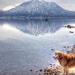 航跡 a wake on the lake #湖 #カヌー #青空 #カヤック #wake #trail #canoe #kayak  #mountain #lake  #風不死岳 #北海道 #山 #樽前山 #golden #dog #photooftheday #dogs #retriever #goldenretriever  #犬 #ゴールデンレトリーバー  #レトリバー #ゴールデン #犬バカ部 #癒しワンコ #ふわもこ部 #ゴールデンレトリバー