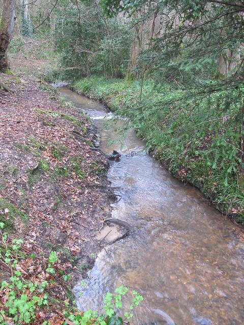 Stream in Squabb Wood SWC Walk 58 Mottisfont and Dunbridge to Romsey taken by Karen C.
