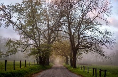 road morning trees sky mist mountains color colour fog sunrise fence landscape nationalpark spring soft time fences serene greatsmokymountains cadescove sparkslane