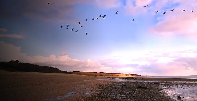 Birds over the Beach