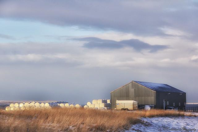 Last harvest - Iceland
