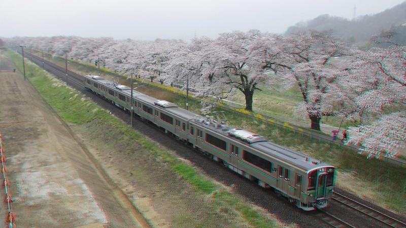 Cherry blossoms and a train (Hitome-senbon-zakura), anaglyph