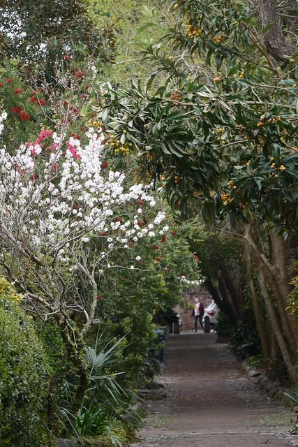 日, 2016-03-20 15:18 - Loquat ビワ、Peach Blossom ハナモモなど etc