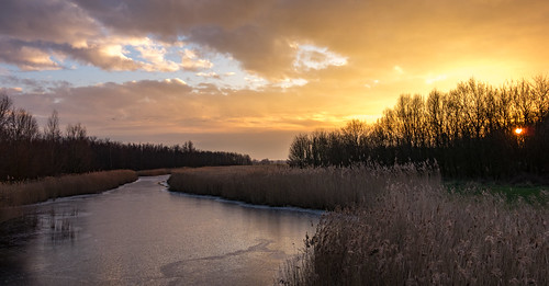 trees winter sunset orange ice reed water landscape sundown middendelfland migrantbirds nederlandvandaag