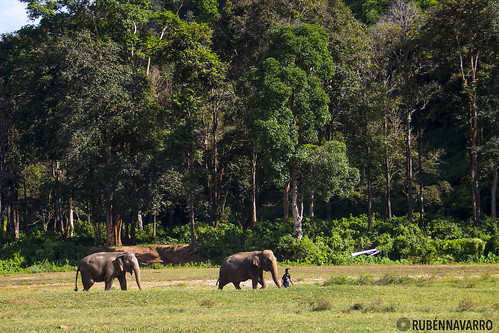 Elephant Nature Park | by gtmdreams