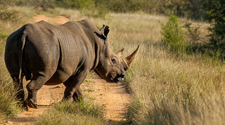 Black Rhino In All It's Glory | by www.craigrogers.photography