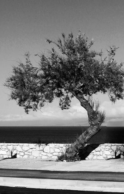 Gli alberi sono gli strumenti a fiato del vento. (Marian Bogdala)