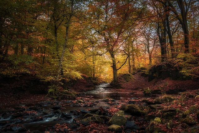 Autumn comes to Tockholes