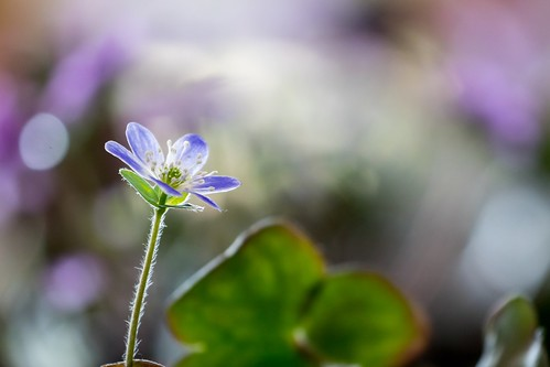 流れる季節 | by hiroching