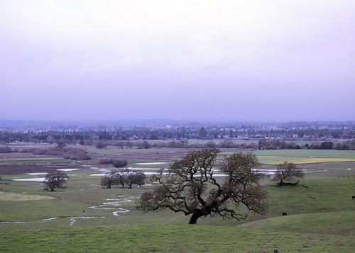 california tree nature field grass fog landscape us outdoor nikond50 santarosa sonomacountyregionalparks stevenpmoreno stevenmorenospix2016