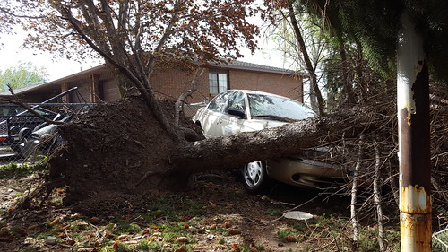 Tree fell on cars | by denebola2025