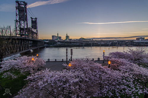 bridge oregon sunrise river portland nikon downtown blossoms cherryblossoms portlandoregon 2016 wllametteriver
