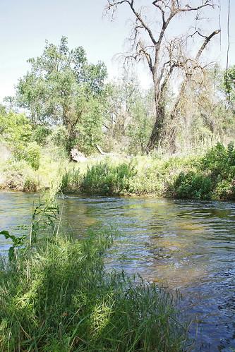 california wildrosetrail kaweahoakspreserve