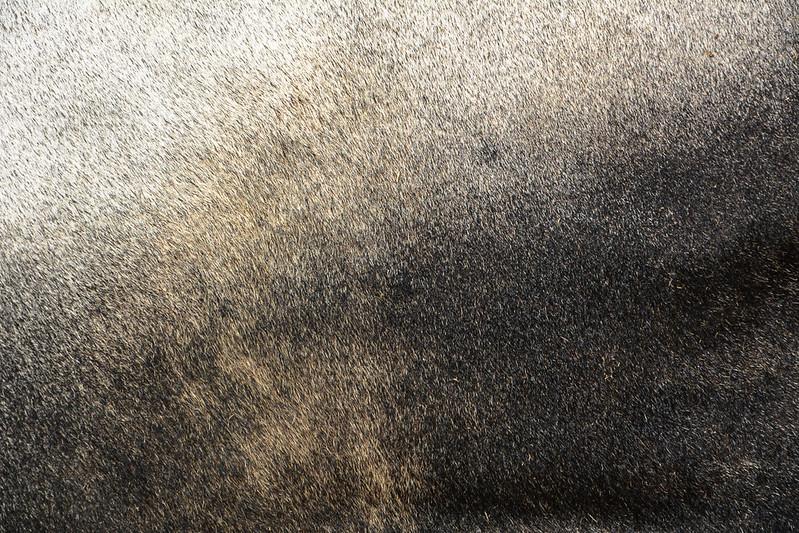 animal-fur-closeup-texturepalace-12
