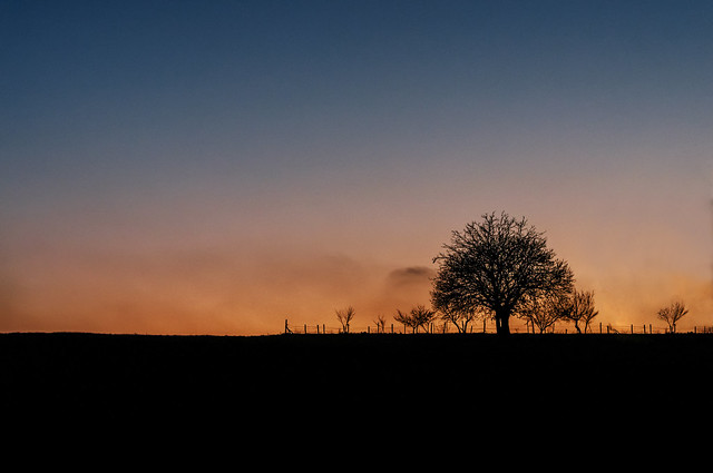 Sunset and Tree.