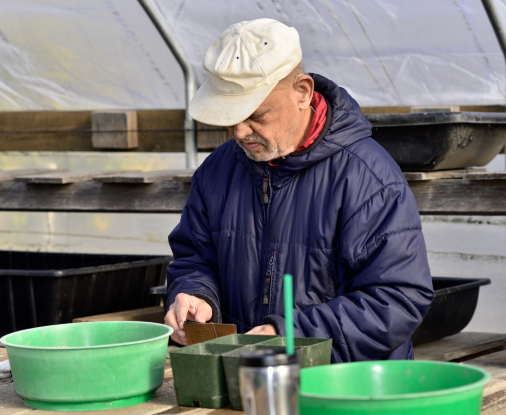 Thumb dsc8550 1024 pepper seeding jan 15th 2016 - Master gardeners santa clara county ...