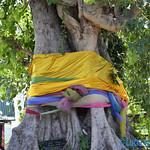 02 Lucia Viajefilos en Ayutthaya19