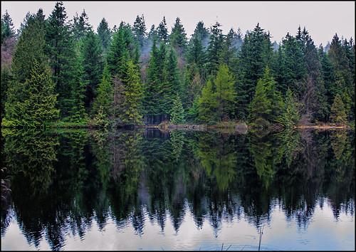 lake reflections landscape mirror bc cedar coquitlam conifer martinsmith mundypark mirrorlike mundylake nikond7000 ©martinsmith nikkor1855mmf3556gvrii