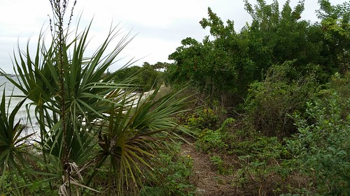 trees sky plants gulfofmexico nature water grass clouds palms landscape scenery tampabay palmtrees shore picnicisland