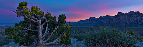 redrockcanyon sunset sky usa southwest nature america landscape lasvegas earth nevada hdr mojavedesert junipertree canon5dmarkiii canonef1635mmf4lisusmlens