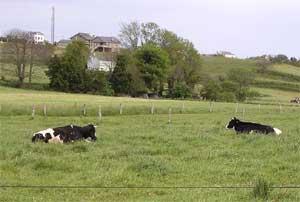 vaques_pic