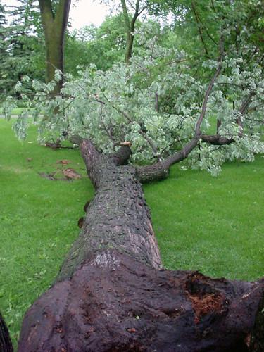 Storm_Damage_Uptown_2204