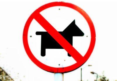 No traiga su perrito
