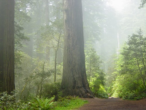 Redwood National Park, California | by Michael Schweppe