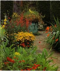 Sunset garden (1)