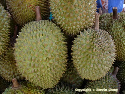 Durian01