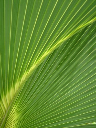 leaf (big) | by Riv