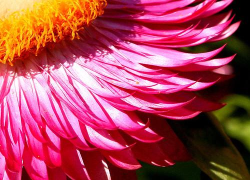 FlowerGratedCarrot