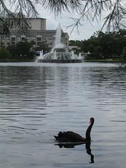 Eola Swan