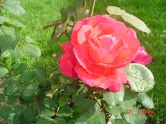 Garden view june 27,2005 014