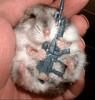 osama-bin-hamster