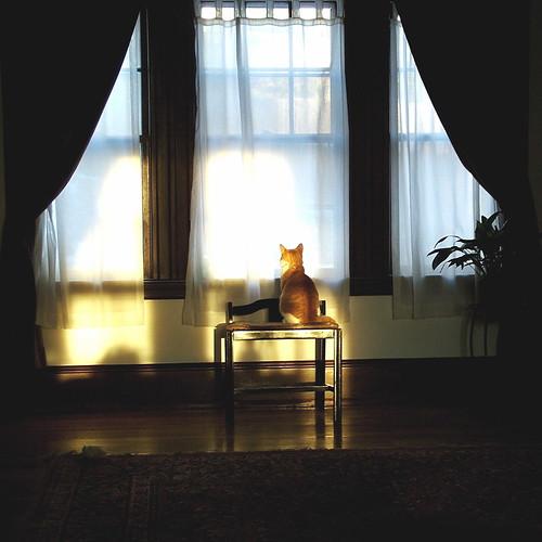usa sun sunlight window boston cat sunrise curtains bos 20070205usa
