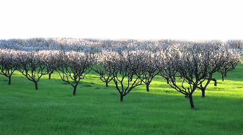 Spring has Sprung | by jurvetson